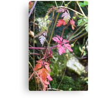colorful leaves in the forest Canvas Print