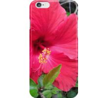 Gleaming Red Hibiscus  iPhone Case/Skin