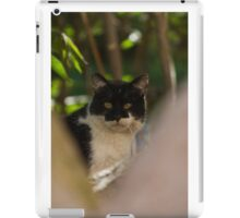 curious cat iPad Case/Skin