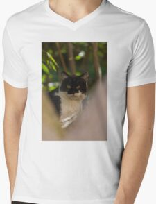 curious cat Mens V-Neck T-Shirt