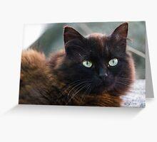 curious cat Greeting Card
