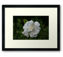 Beautiful One#1 2011, U.S.A. (Please READ description)  Framed Print