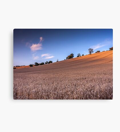 Harvest Meadow, Devon Canvas Print