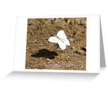 Cabbage White Butterfly - Pieris rapae; La Mirada, CA USA Greeting Card