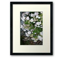 Love, Lace (Hydrangea White Lacecap) Congratulations! Framed Print