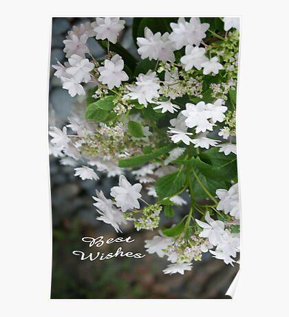 Love, Lace (Hydrangea White Lacecap) Congratulations! Poster