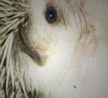 hedgehog curled in a ball Sticker