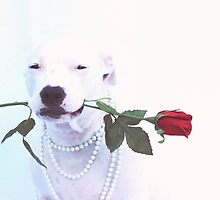 Dog with Rose by Believeabull