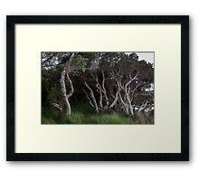 Paperbark Dance Framed Print
