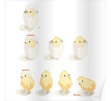 Hatched Chicks - as in baby chickens... Poster
