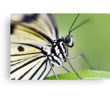 Butterfly Detail Canvas Print