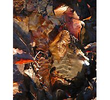 Natural Canvas Photographic Print
