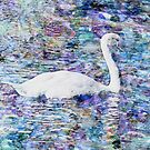 Subtle Swan by mrthink