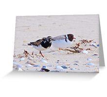 SHOREBIRD ~ Ruddy Turnstone and Hooded Plover by David Irwin Greeting Card