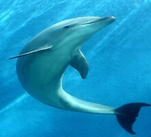 DOLPHIN by Icarusismart