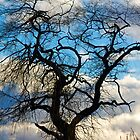 Winter's one tree by RichImage