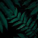 Dark Leaves II by Mareike Böhmer