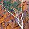 Wild Oz - Photographs taken in Australia  - 3 photos per day