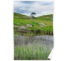 river reeds and lake on the kerry way Poster