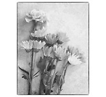 Floral Study in B&W Photographic Print