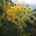 grevillea by jayview
