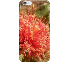Banksia ilicifolia - Holly leaved Banksia in Red iPhone Case/Skin