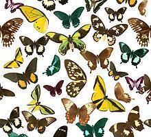 Butterflies by TabithaBianca