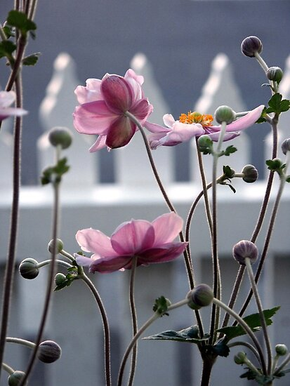 Japanese Windflowers by Tiffany Dryburgh