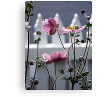 Japanese Windflowers Canvas Print