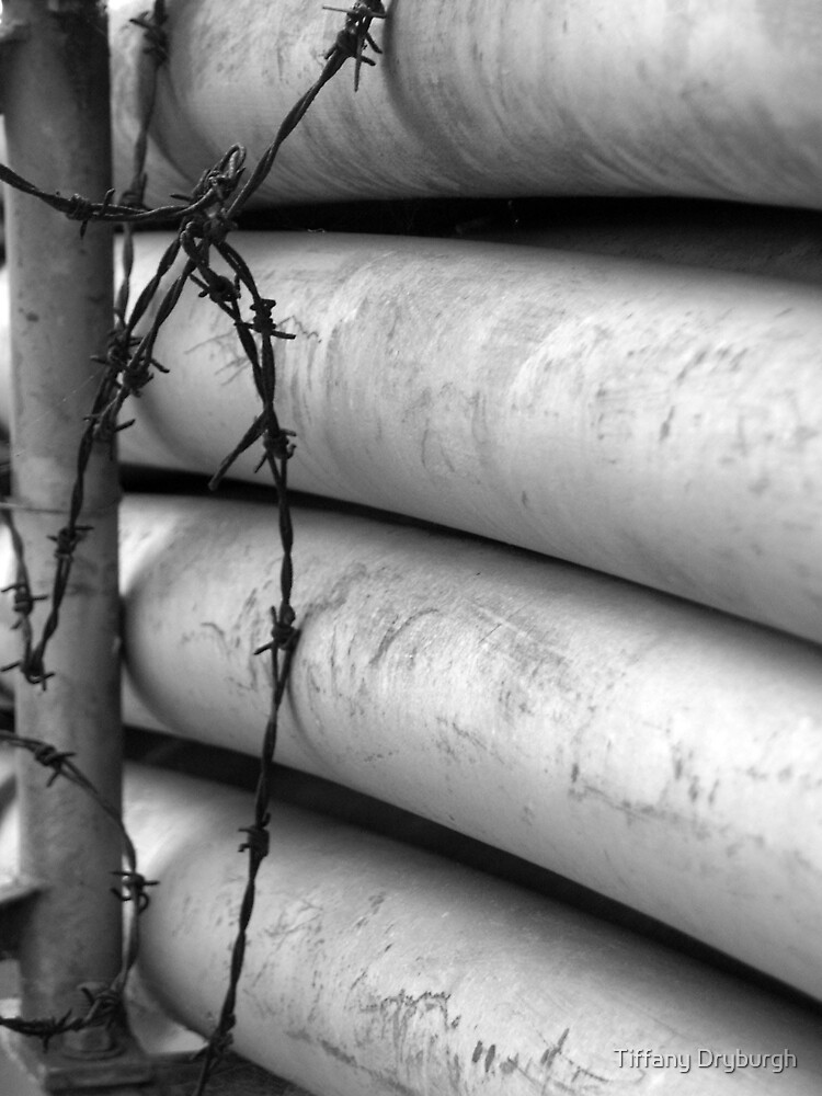 Barbed Wire by Tiffany Dryburgh