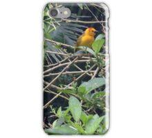 Taveta Golden Weaver Bird- Wildlife.  iPhone Case/Skin