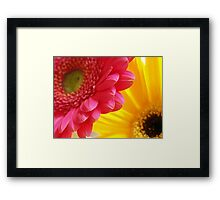 Pink & Yellow Framed Print
