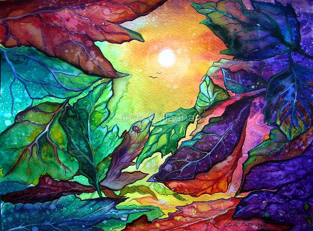 Colours of Sunshine  by Linda Callaghan
