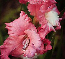 A Blush Of Colour by Christine Lake