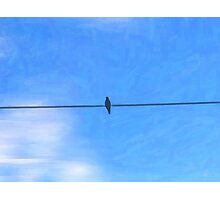 One Bird. One Wire. One Sky. Photographic Print