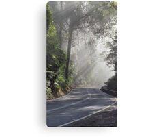 Sunlight through fog and trees Canvas Print