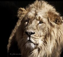 ...in the jungle, the mighty jungle, the lion sleeps tonight... by John44