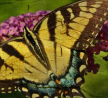 Eastern Tiger Swallowtail Butterfly - Papilio glaucus - Female Sticker