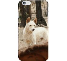Bruce's Dingo iPhone Case/Skin