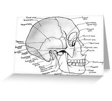 Labeled Skull Side Greeting Card