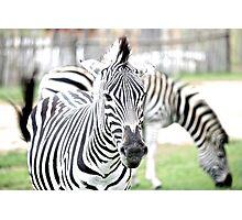 Zebra Lite Photographic Print
