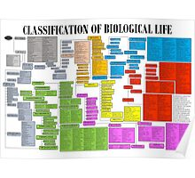 Classification of Biological Life Poster Poster