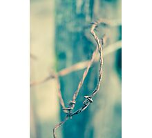 Sinuous Photographic Print