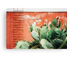 Closeup on Cacti Growing in Front of Shabby Red Wall Shot on Porta 400 Canvas Print