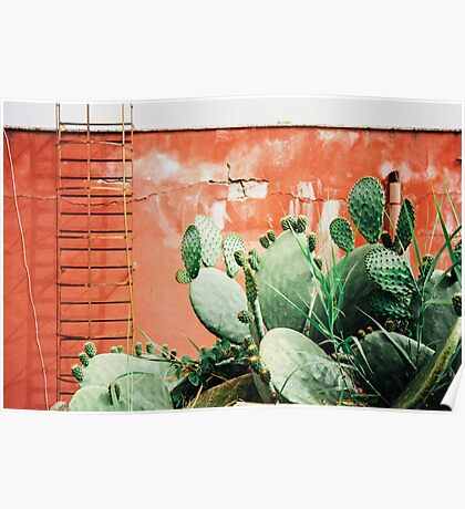 Closeup on Cacti Growing in Front of Shabby Red Wall Shot on Porta 400 Poster