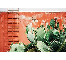 Closeup on Cacti Growing in Front of Shabby Red Wall Shot on Porta 400 Photographic Print