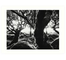 Black and White Shot of Ancient Whistman's Wood at Sunrise (Dartmoor NP, England) Art Print