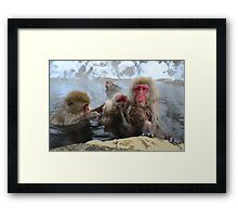 Family grooming time Framed Print