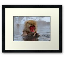 Snow monkey Japan Framed Print
