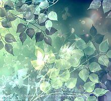 Summer Spark  by Stephanie Rachel Seely